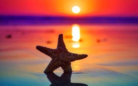 3-starfish-sunrise-wallpaper